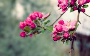 beauty_of_nature-beauty_spring_desktop_wallpaper_1920x1200
